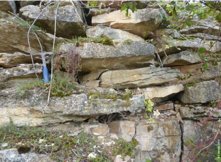 calcaire-premeaux