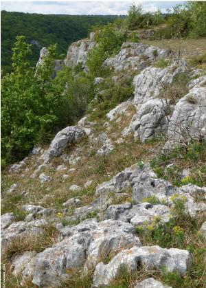 calcaire-comblanchien